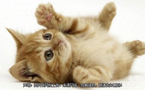 好听有创意的宠物猫名字大全